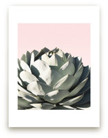 Pink Agave