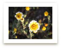 Yellow Wild Flowers by Pelin Hepcilingirler