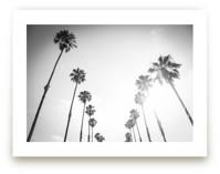 California Palms by Lauren Armellini