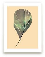 feather fly in the Sky by Tereza Šašinková Lukášová