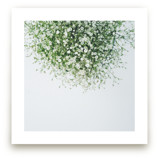 Gypsophila by Marabou Design