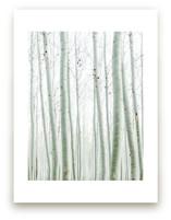 Quiet Poplars by Jenni Kupelian