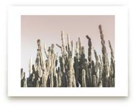 Summer Cactus