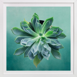 pointed succulent Art Print