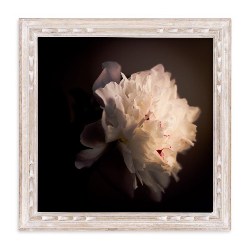 """A White Peony"" - Limited Edition Art Print by Qing Ji in beautiful frame options and a variety of sizes."