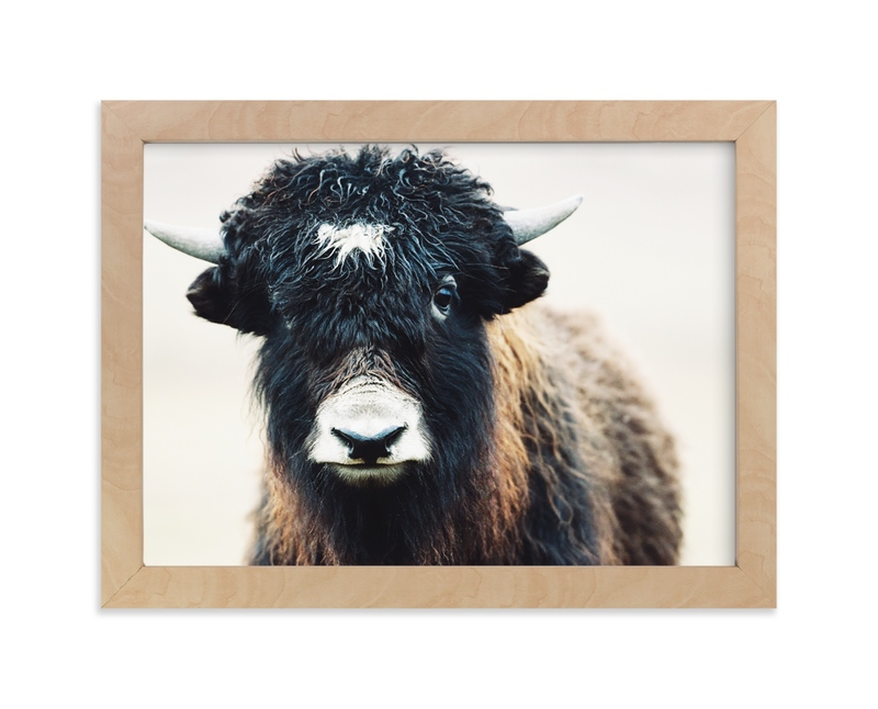 """""""Thomas Bangs"""" - Limited Edition Art Print by Amy Carroll in beautiful frame options and a variety of sizes."""