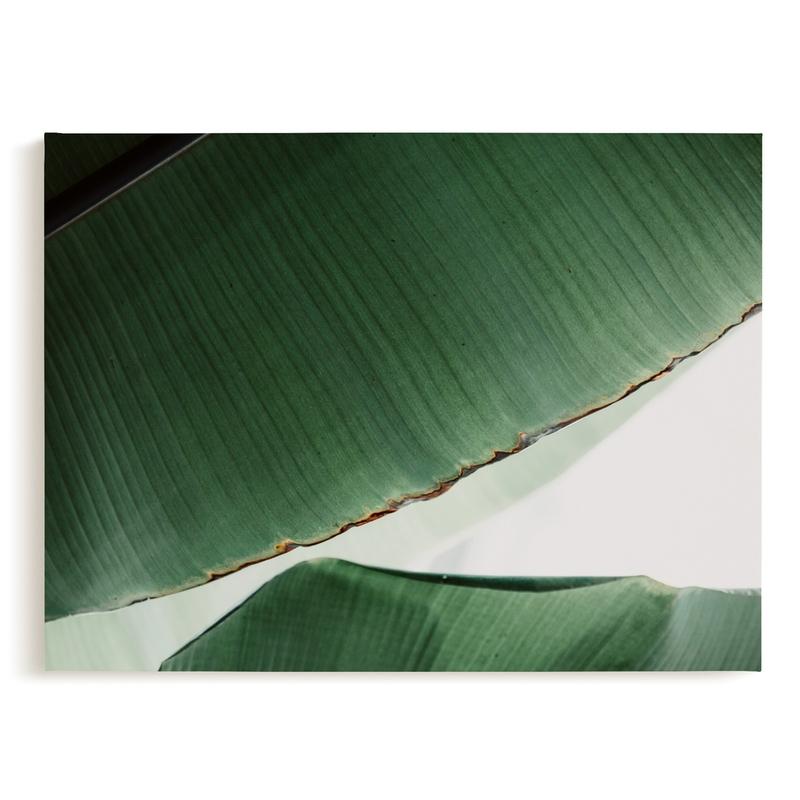 leaf & light 1 Art Print