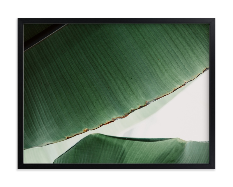 """leaf & light 1"" - Limited Edition Art Print by Alicia Abla in beautiful frame options and a variety of sizes."