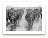 Cattle Drive by Jill Corbin