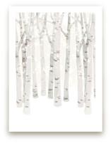 Birch Woods in Winter