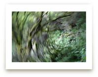 Verdant Swirl by An-Lon Chen