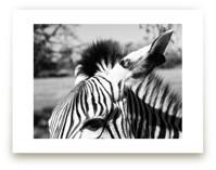 Zebra by Basil Design Studio