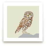 Owl by Faye Femister