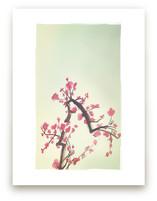 Peach Blossoms by Shasta Knight
