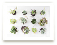 Succulents Observation by Kate Wong