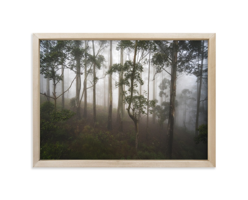 """""""Trees in the Mist"""" - Limited Edition Art Print by Benno and Noosa in beautiful frame options and a variety of sizes."""