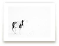 Horses in the Fog by Gabrial Reising