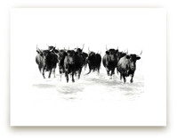 Black Bulls of the Camargue