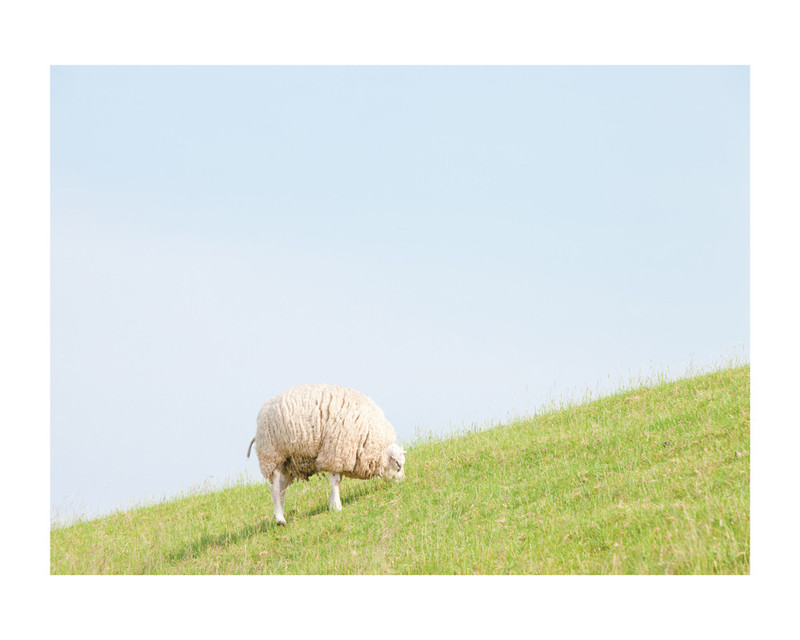 Sheep at Lunch Wall Art Prints by Alexandra Feo   Minted