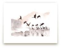 Cranes on a lake by XL