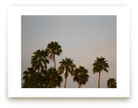 Fancy Palms