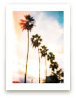 LA Palms by Kate Baird