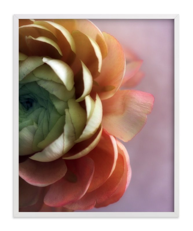 """Romantic Ranunculus"" - Limited Edition Art Print by Becky Nimoy in beautiful frame options and a variety of sizes."