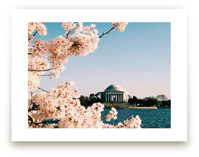 Tidal Basin by Day by AMK