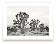 Joshua Tree by Kristi Jackson