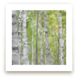 Summer Birches by Amy Hall