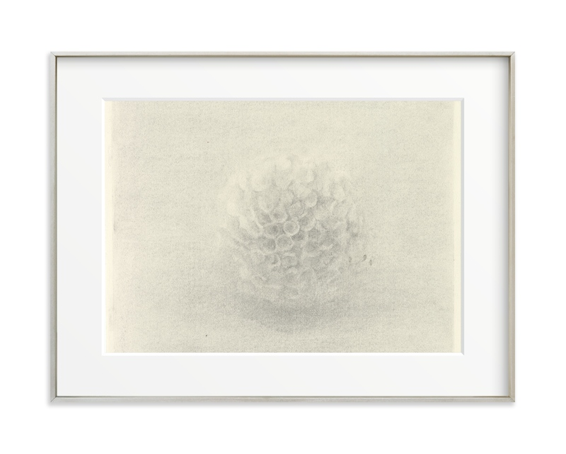 Sea Urchin Art Print