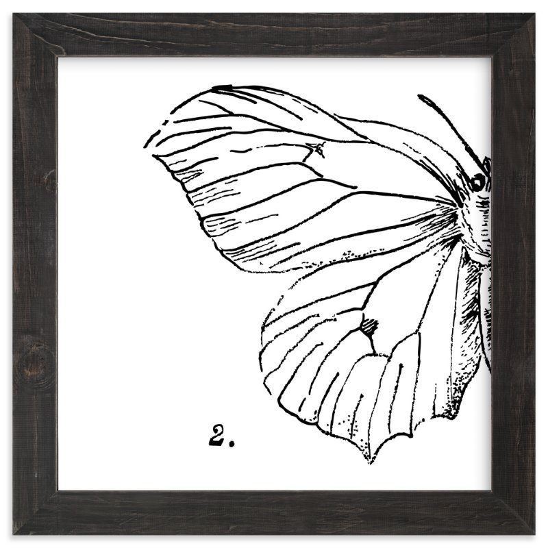"""""""Moth No. 2"""" - Limited Edition Art Print by Mere Paper in beautiful frame options and a variety of sizes."""