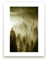 Mystical Forest  by Uros Zagozen