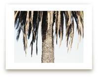 Hanging Palms by Elan Alvarez Sherman