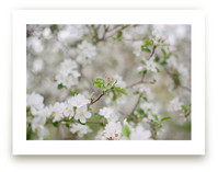 Apple Blossoms: Waiting by Naomi Ernest