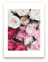 peony palette by Marabou Design