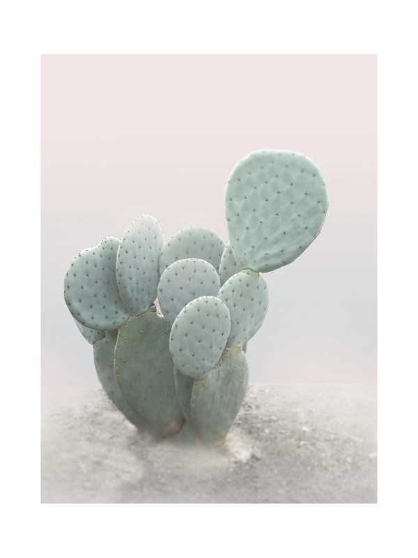 Little Cactus Wall Art Prints by Wilder California | Minted