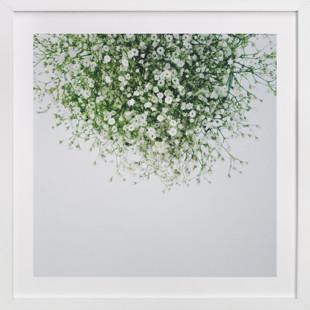 Gypsophila Art Print