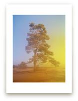 Tree (Hoge Veluwe, Neth... by Tommy Kwak