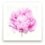 Fresh Bloom by Amanda Graus - All Things Pretty Blog