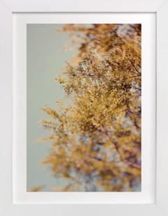 Bohemian Spring Art Print