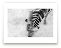 Zebra from Above by Mary Ann Glynn-Tusa