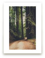 Walk Into the Woods by Bente Jorgensen-Barajas