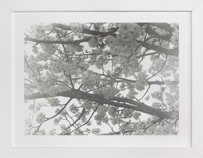 Remembered Spring Art Print