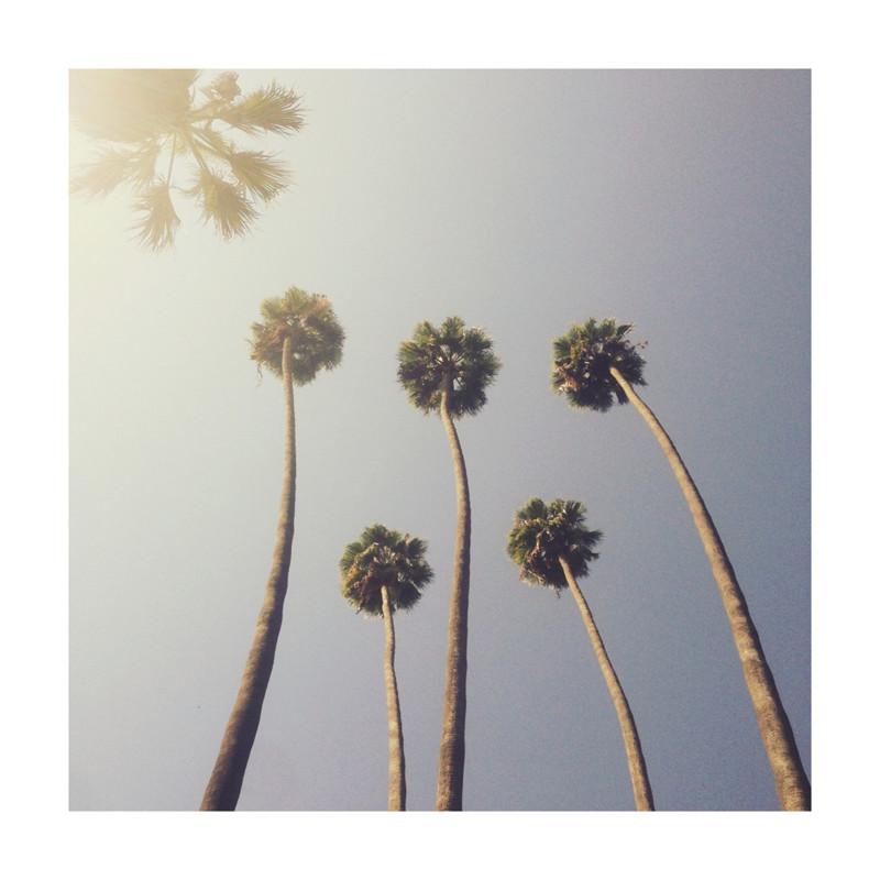Sunny palm trees wall art prints by five sparrows minted thecheapjerseys Image collections