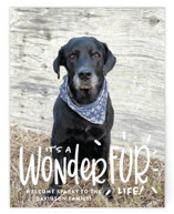 This is a white holiday enclosure card by Sandra Picco Design called It's a Wonder-FUR Life with standard printing on signature in standard.