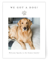 This is a grey holiday enclosure card by Minted called Simple Paw Print with standard printing on signature in standard.