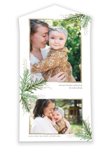 This is a green all in one holiday card by Jessica Williams called Golden Evergreens with standard printing on value cover in all-in-one.