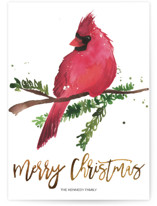 This is a brown non photo holiday card by Kelsey McNatt called Christmas Cardinal with standard printing on signature in standard.