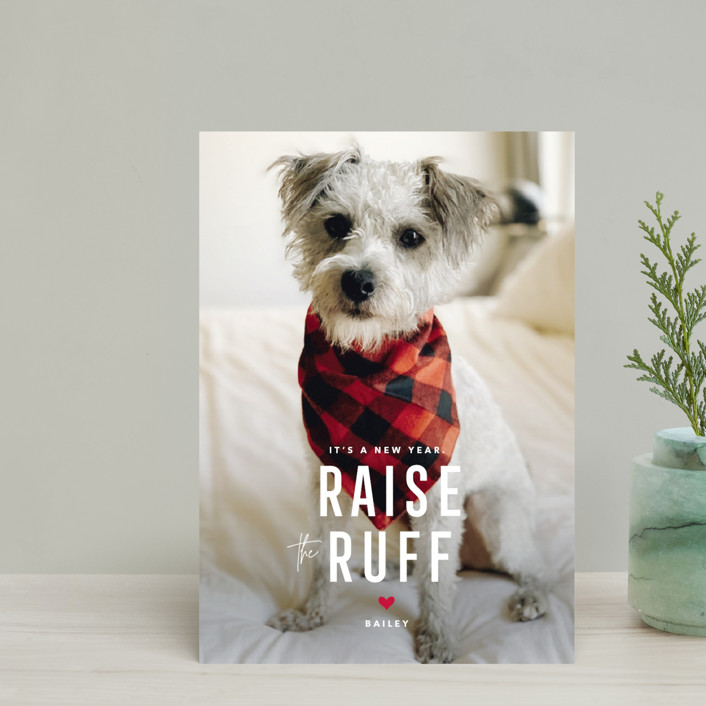 """""""Paws for Claus"""" - Funny Holiday Postcards in Snow by Guess What Design Studio."""